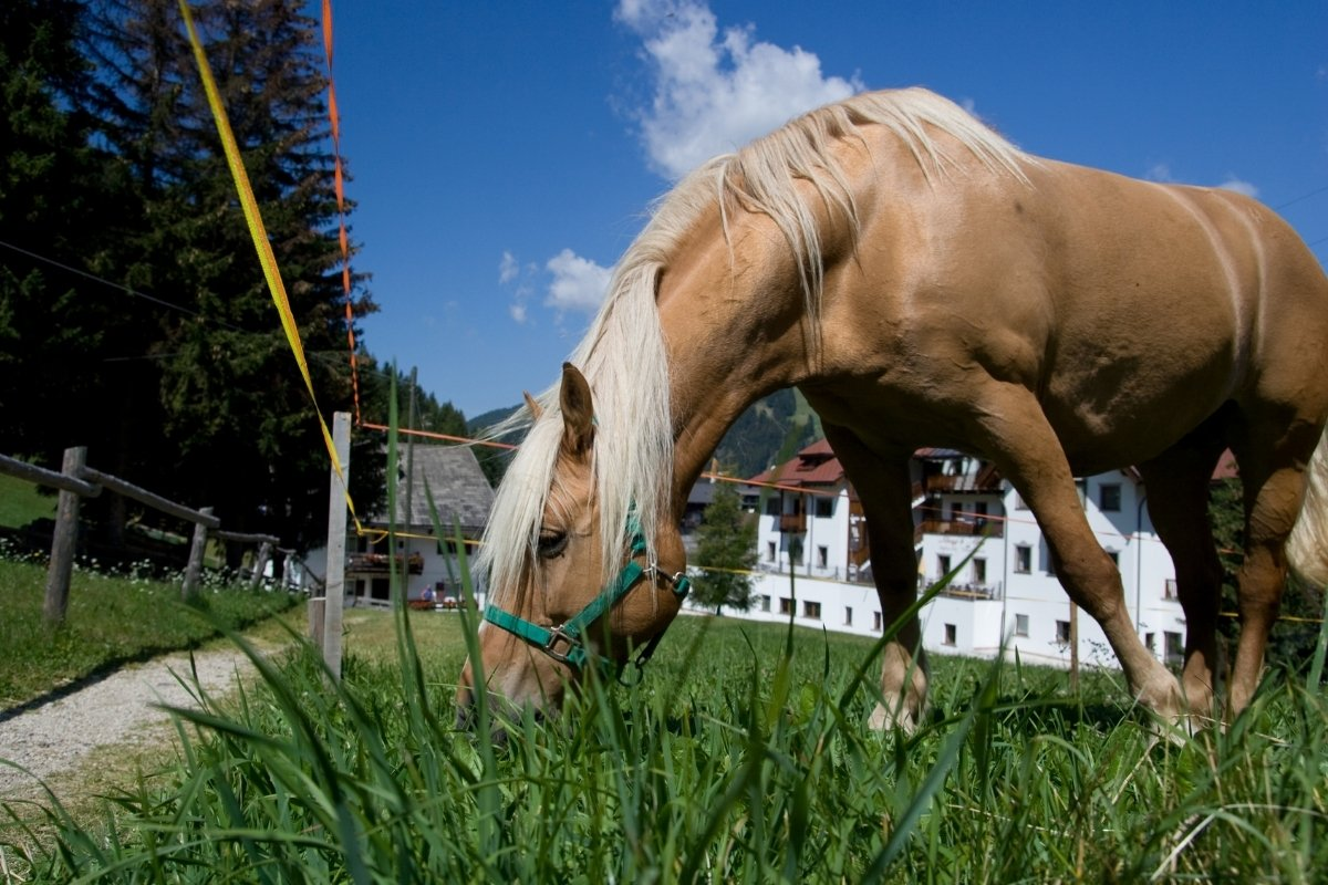 What Is The Best Probiotic For Horses