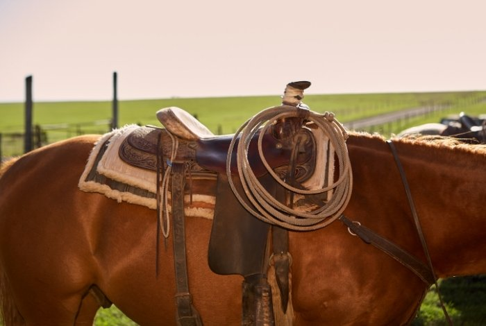 Break-In a Quality Roping Saddle