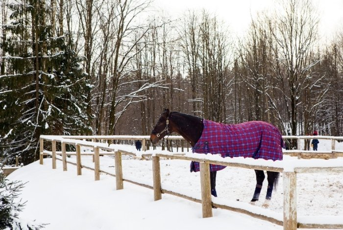 How Horses Combat Cold Weather