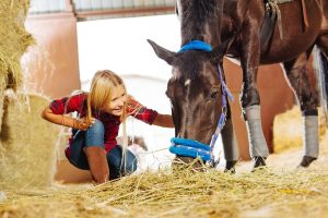 Questions to Ask When Leasing a Horse