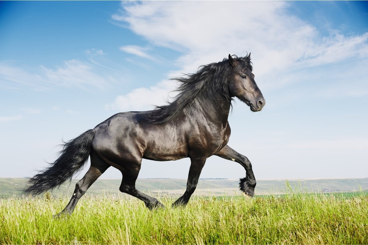 What Is The Best Calming Supplement for Horses