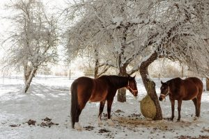 How Much Hay To Feed A Horse In Winter