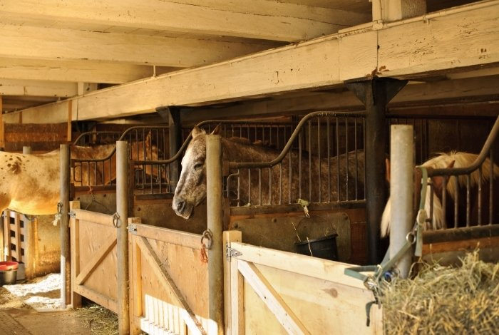 Purpose of Horse Stall