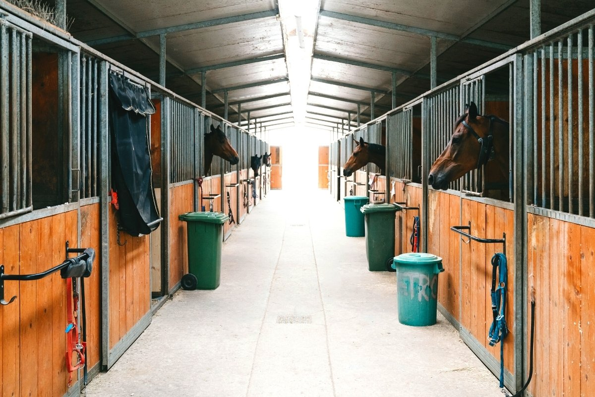 What Is The Average Horse Stall Size