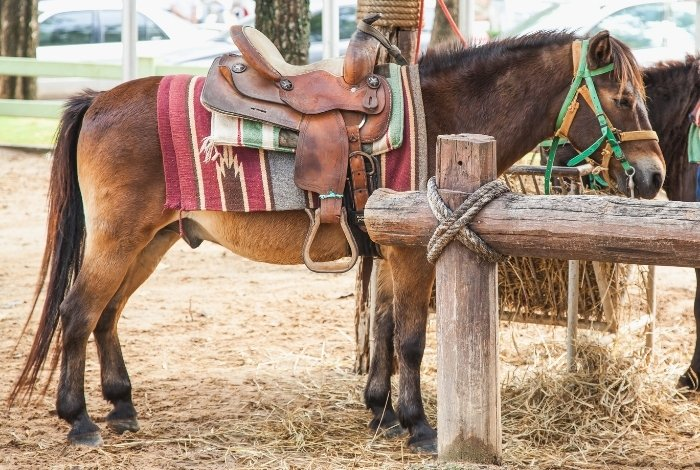 Be Prepared to Tie a Horse to a Post - Do´s and Don´ts