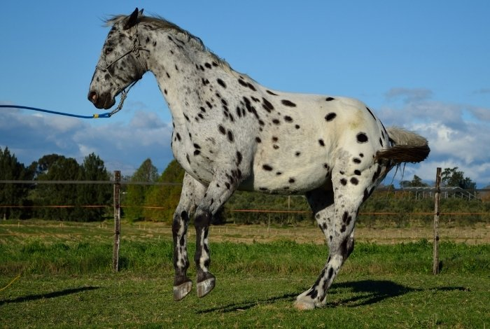 Cost of Gelding a Horse