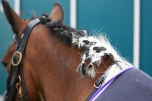 Different Ways to Braid a Horse's Mane
