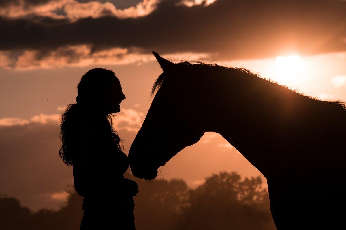 Horse Years vs Human Years