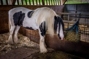 What Kind of Hay is Best for Horses
