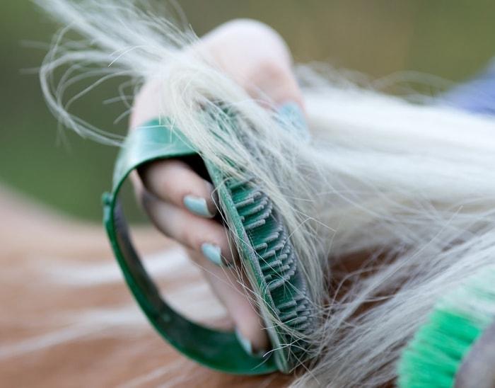 balding horse