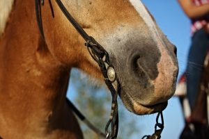 Reining Bits Explained - Stop Making Your Head Spin
