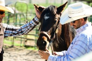 The Top Things To Ask When Buying A Horse