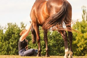 5 Signs That A Horse Trusts You