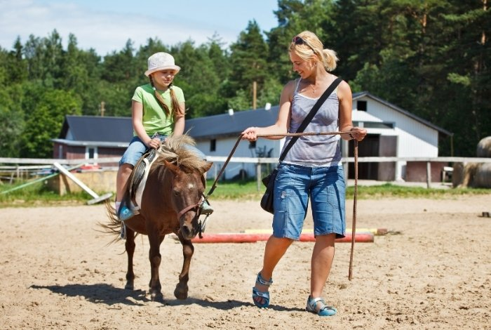 How Much Weight Can A Mini Horse Take