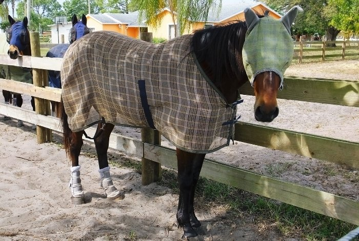 How To Choose The Right Fly Sheet For Your Horse