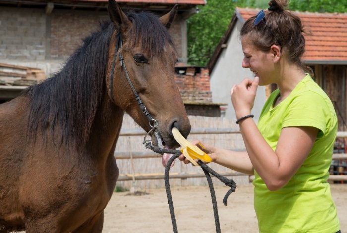 How To Feed A Horse Banana Peels And Their Flesh