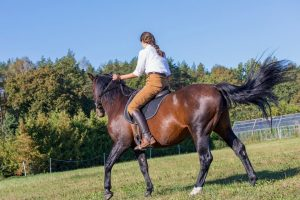 How To Trot On A Horse For Beginners - Get Practicing