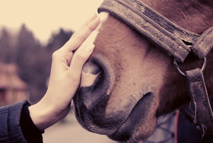 Is It ok to ride a Horse - Are Horses Meant To Be Ridden