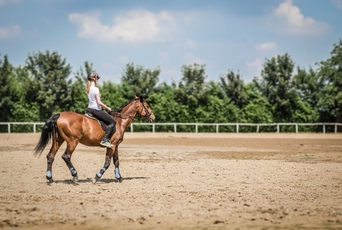 Trot on a Horse around the Arena for Beginners