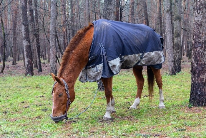 What Horses Benefit From Wearing A Fly Sheet
