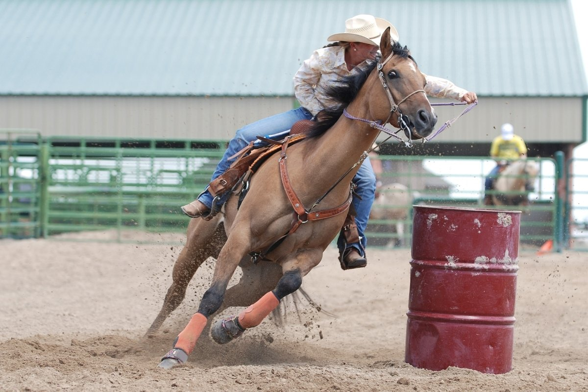 5 Best Breed Of Horse For Barrel Racing