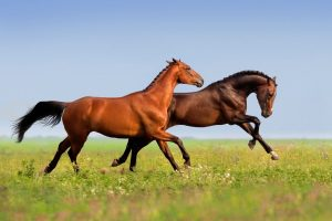 Fastest Horse In The World Ever - Is It Just One