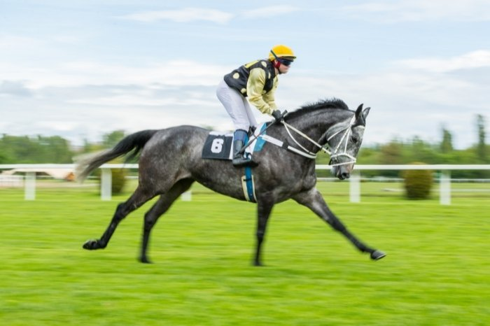 Fastest Horse Speed In The World Ever
