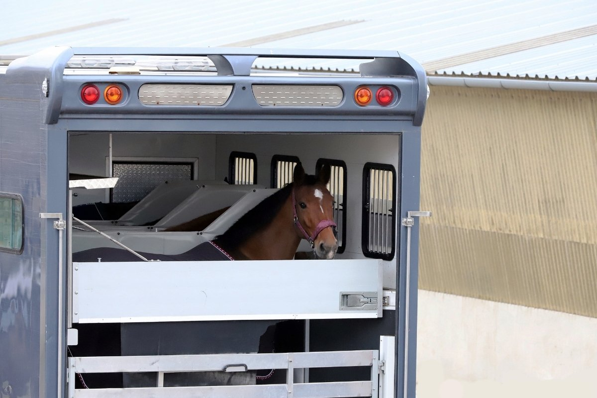 Hawk Horse Trailer Reviews - Are They Good