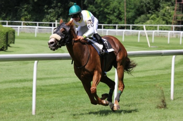 Hawkster - Fastest Horse In The World