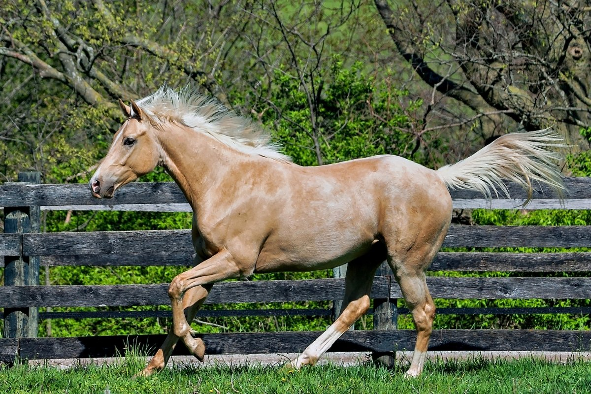 How Fast Do Thoroughbreds Run - Is It The Fastest