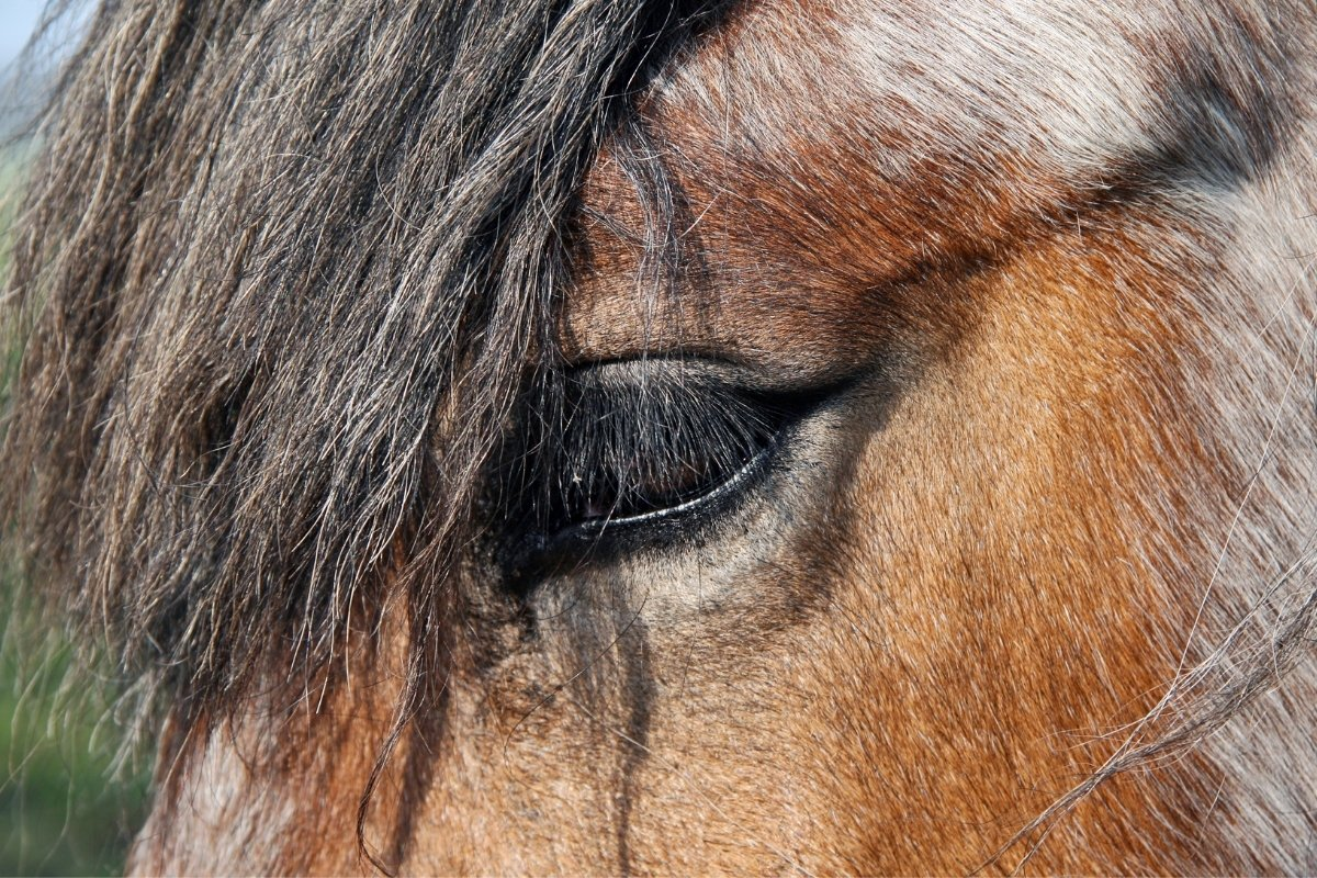 How Old Is The Oldest Horse In The World