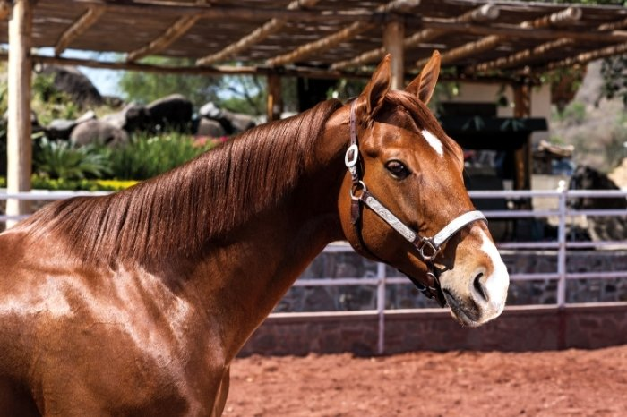 Interesting Facts About Stallions
