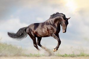 Is A Stallion A Male Or Female - It's Simple!