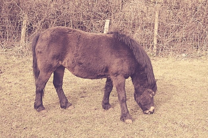 Oldest Pony In The World