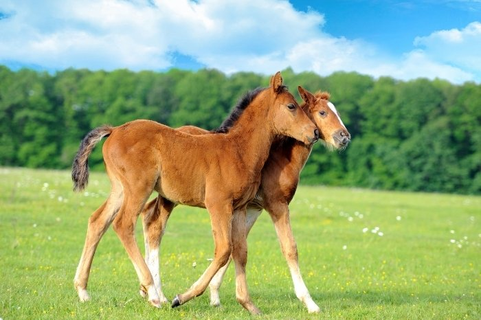 What Are Male Horse Called - Colt