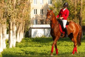 What Does It Mean When A Horse Is Gaited