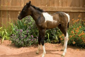 What Is A Baby Horse Called - Not So Straightforward