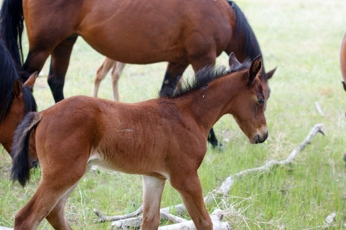 What Is A Baby Horse Called