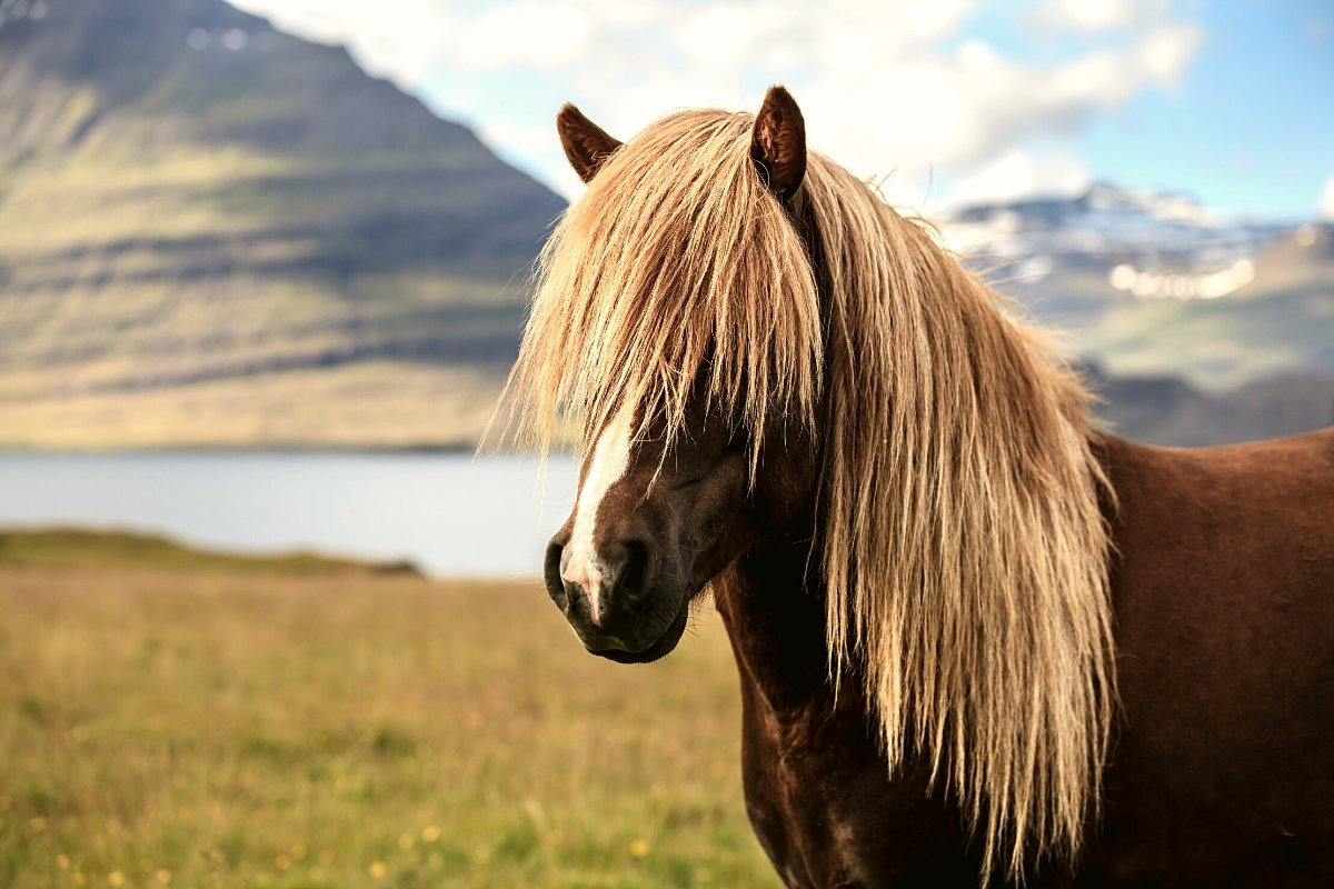 5 Horse Breeds With Long Hair