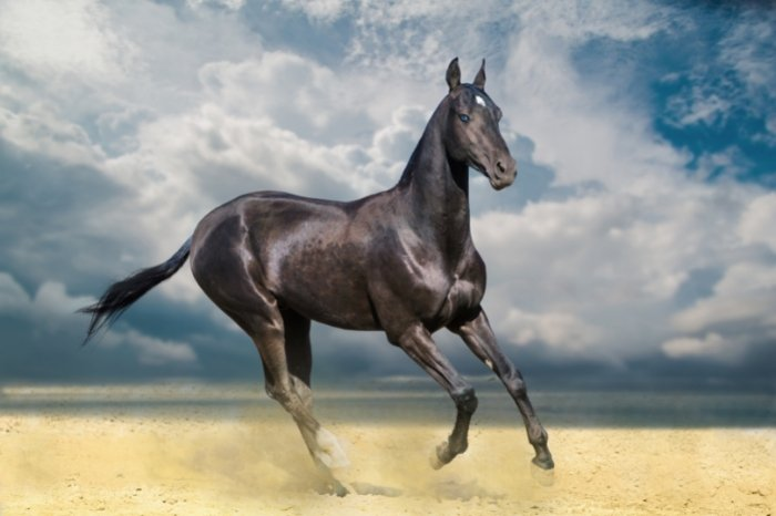 Akhal-Teke - One of the Most Expensive Horse In The World