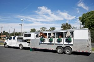 Horse Trailer Insurance Cost - Worth Every Cent