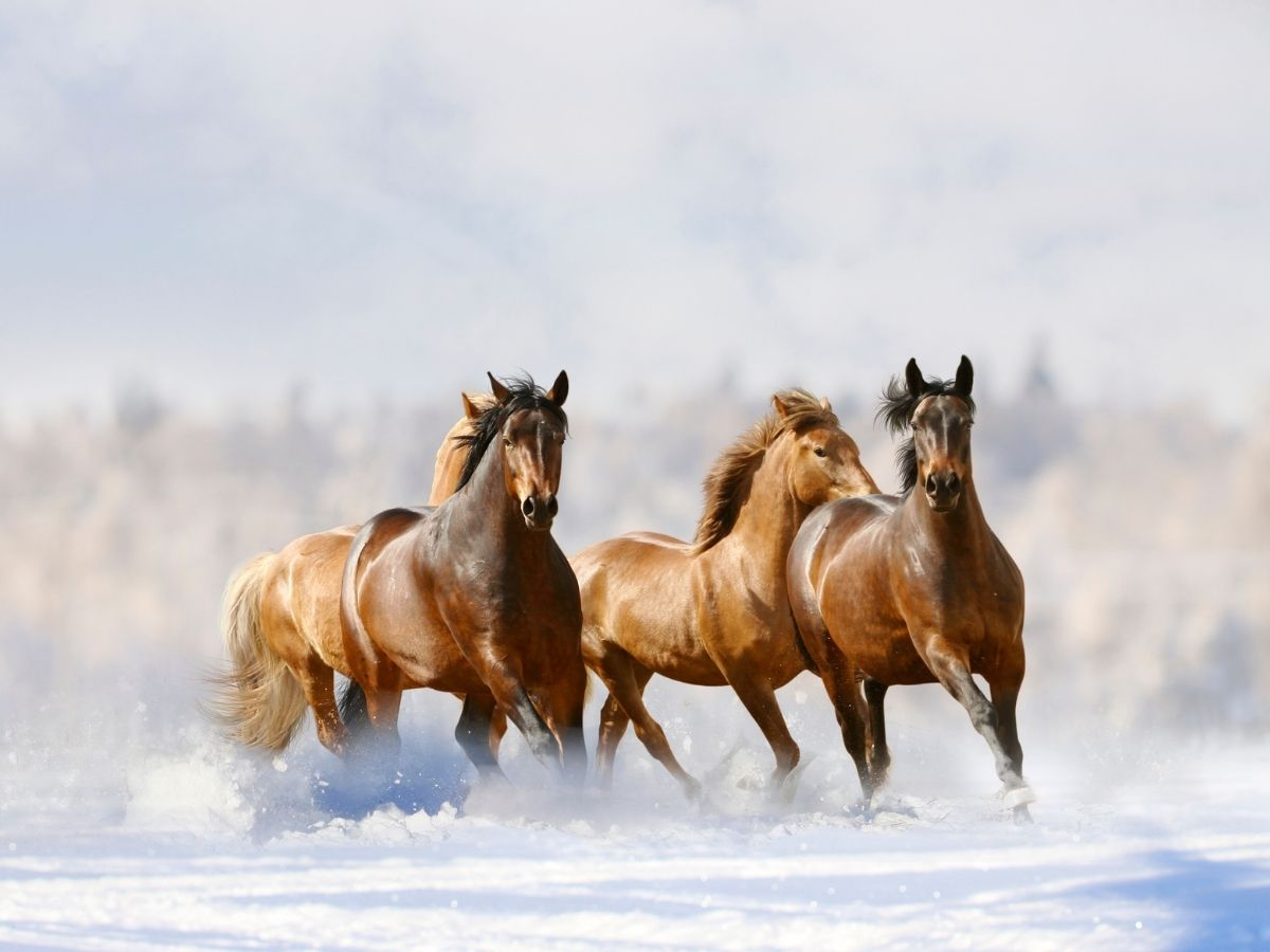 How Far Can A Horse Run Without Stopping