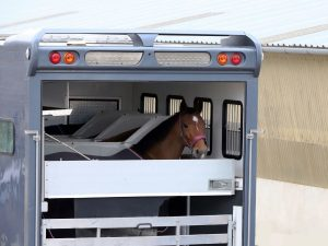 How Much Does A 4 Horse Trailer Weigh