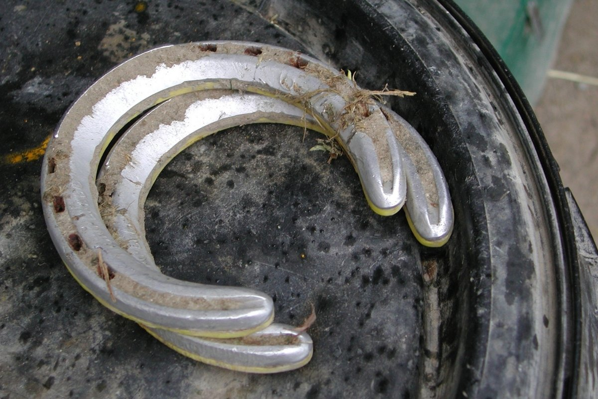 Type Of Horse Shoes - What You Will See Most