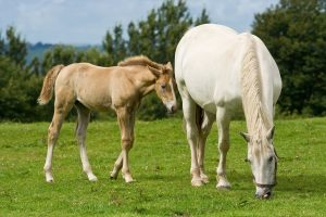 What Is A Filly Horse Mean