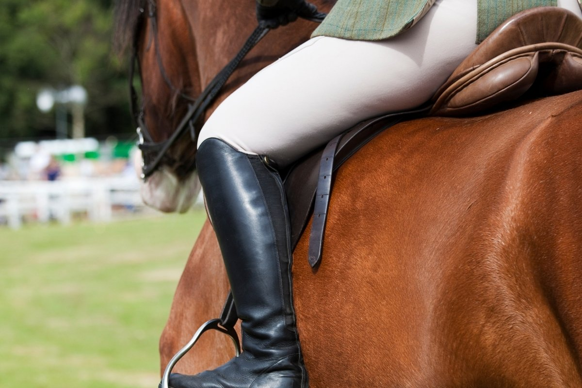 5 Best Horse Breed For Heavy Riders