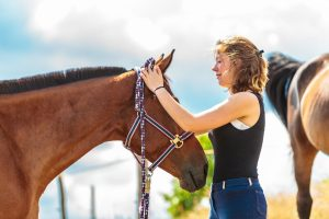 Caring For Horses: Information For Beginners