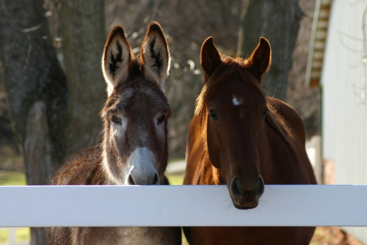 Donkeys And Horses Living Together – Is It Possible