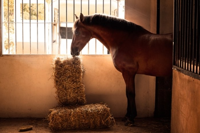 Guide To How To Take Care Of A Horse For Beginners - Accommodation