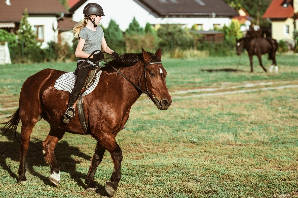Horse Jumping Lessons For Beginners